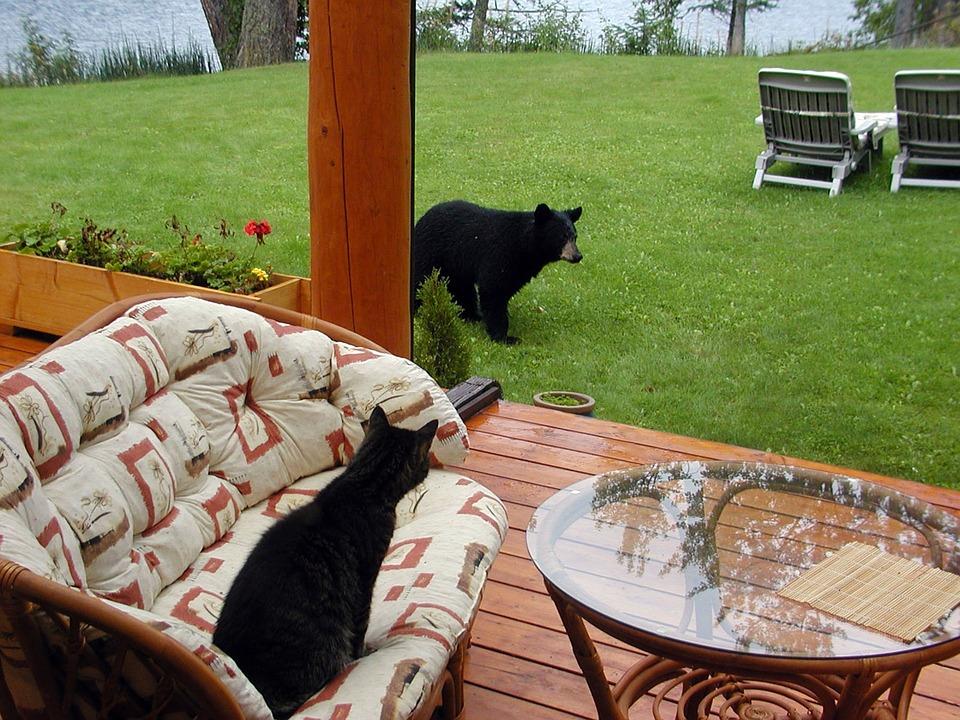 Kočka hrdinkou – vyhnala všetečného medvěda od domu