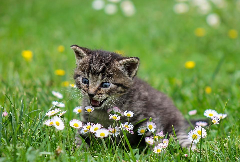 Krásný dárek – rodině se po necelém roce vrátila kočička